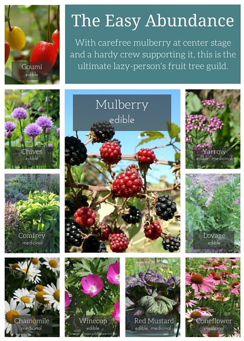 Mulberry Guild