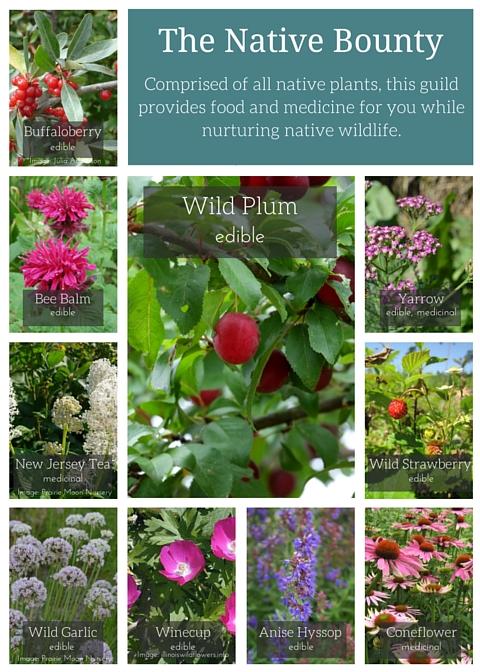 Wild Plum Guild