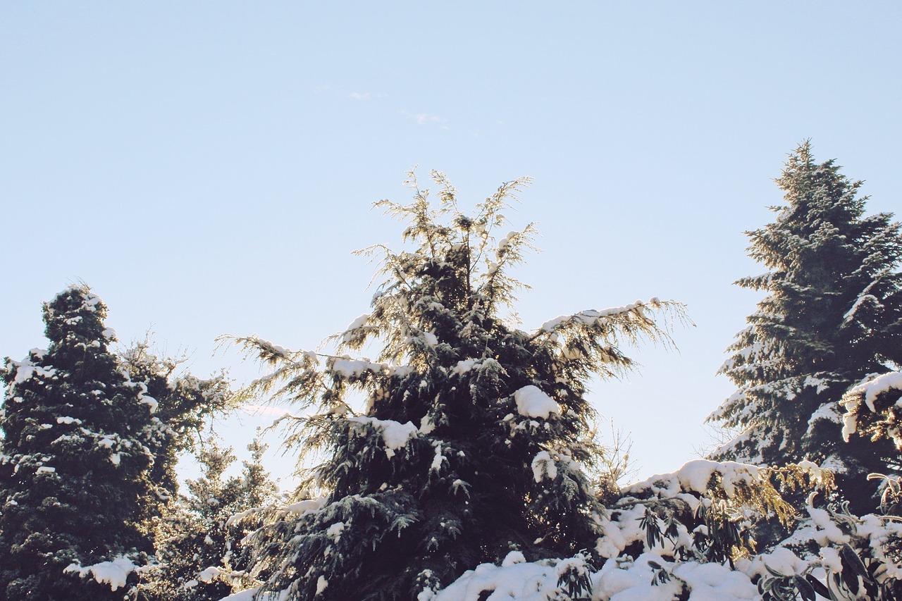 trees-1154469_1280
